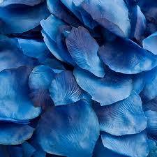 bluerosepetals