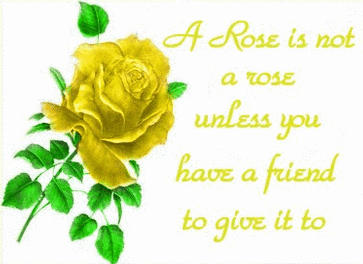 yellow rose of friendship the secret language of flowers