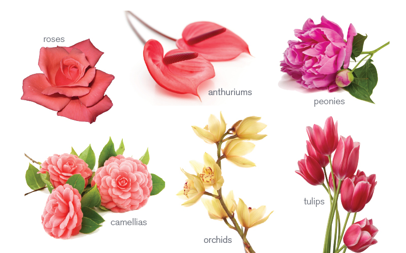 Meaning of a flower the secret language of flowers for Flowers that represent love